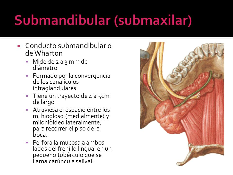 Submandibular (submaxilar)