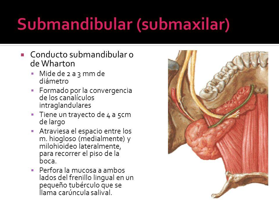 Submandibular (submaxilar)