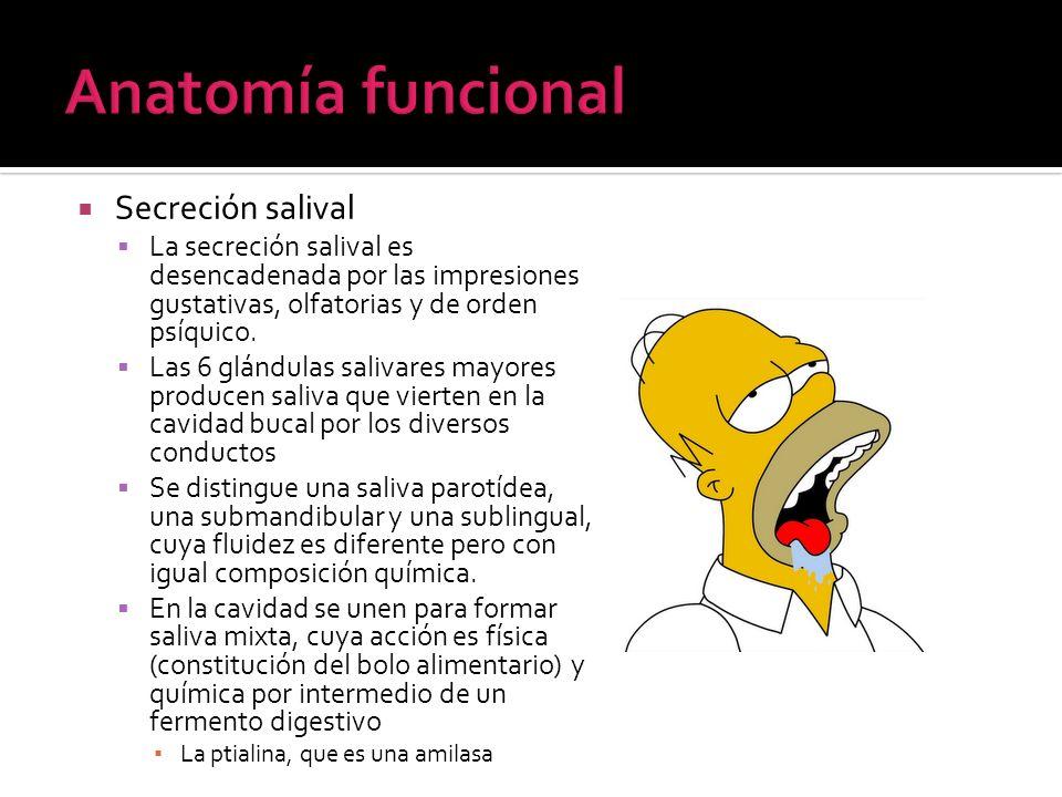 Anatomía funcional Secreción salival