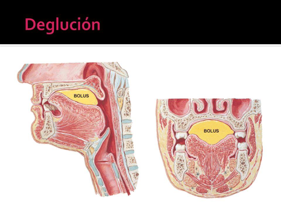 Deglución Fase oral preparatoria, mast. Lubricac.