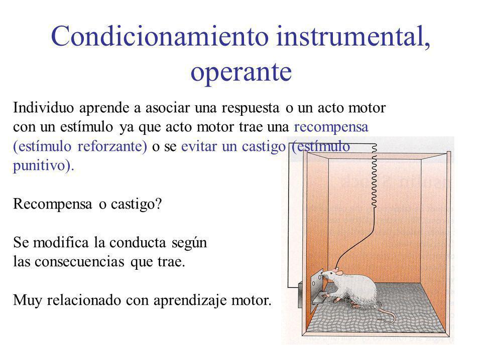 Condicionamiento instrumental, operante