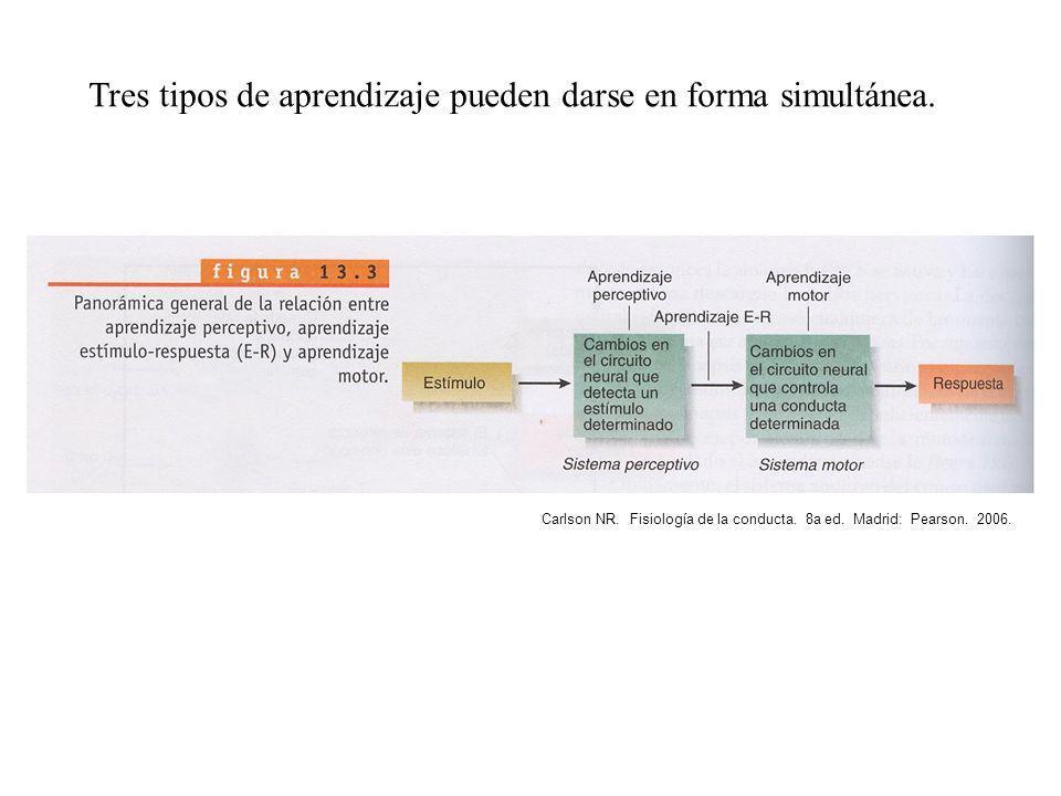 Tres tipos de aprendizaje pueden darse en forma simultánea.