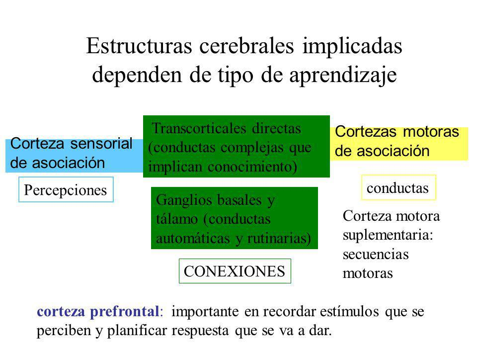 Estructuras cerebrales implicadas dependen de tipo de aprendizaje