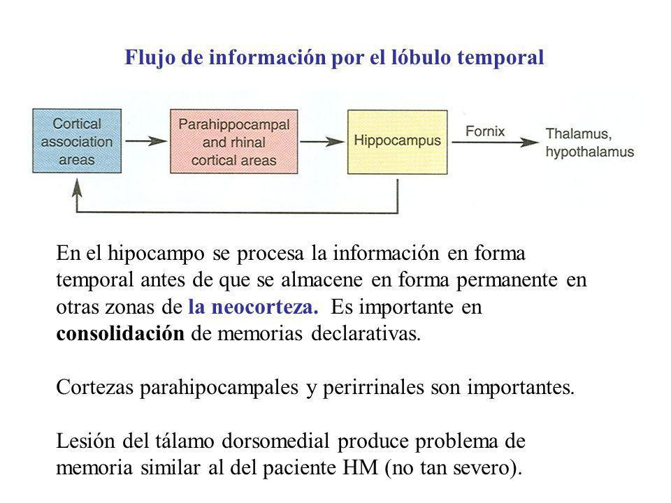 Flujo de información por el lóbulo temporal