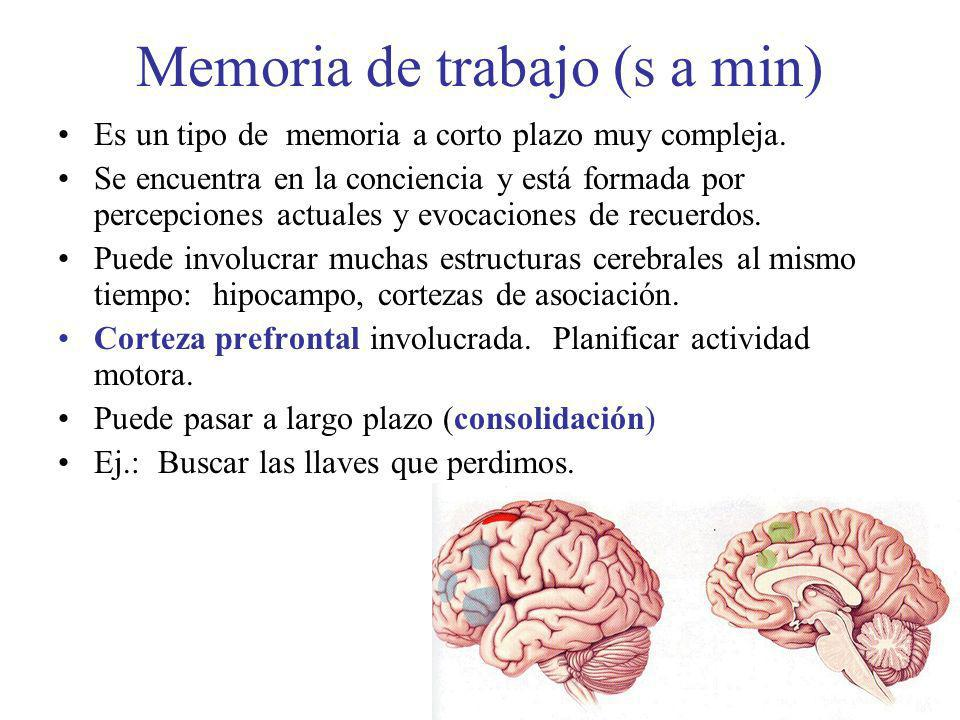 Memoria de trabajo (s a min)