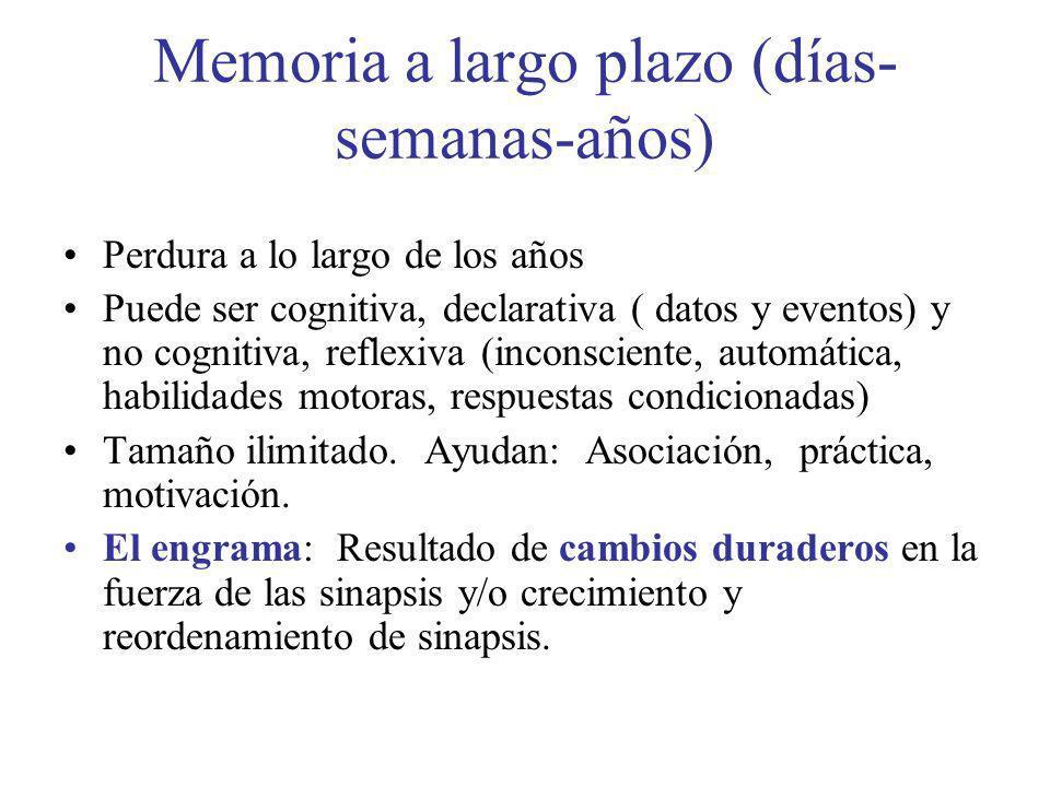 Memoria a largo plazo (días-semanas-años)