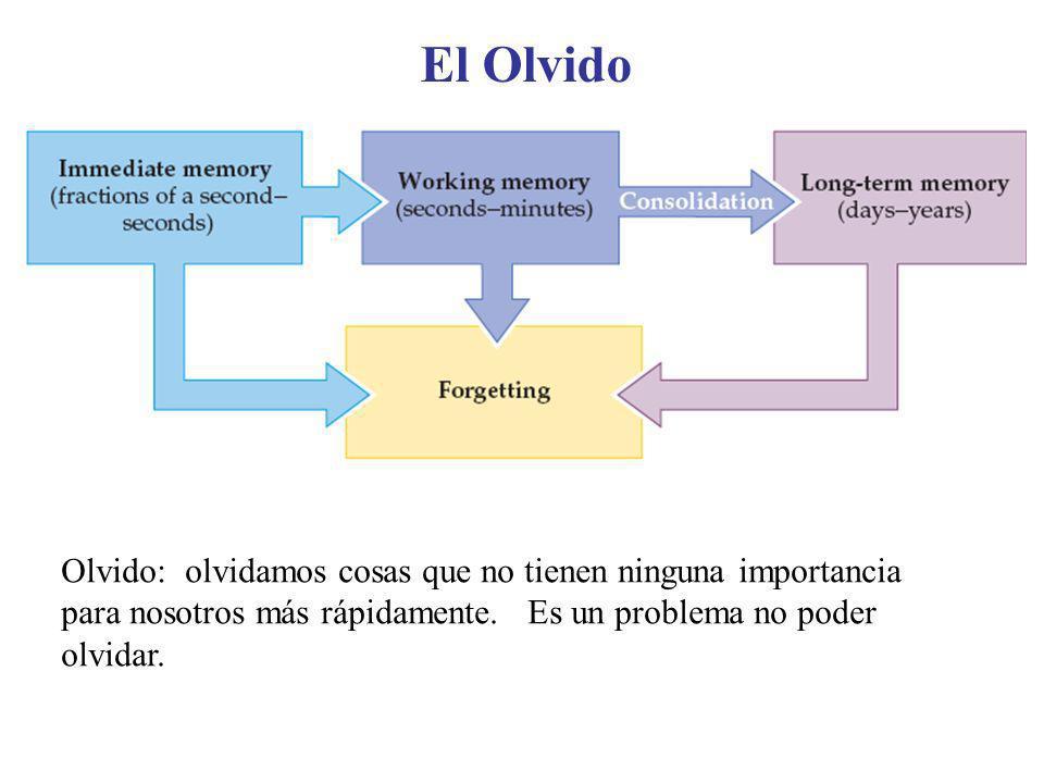 El Olvido Olvido: olvidamos cosas que no tienen ninguna importancia para nosotros más rápidamente.