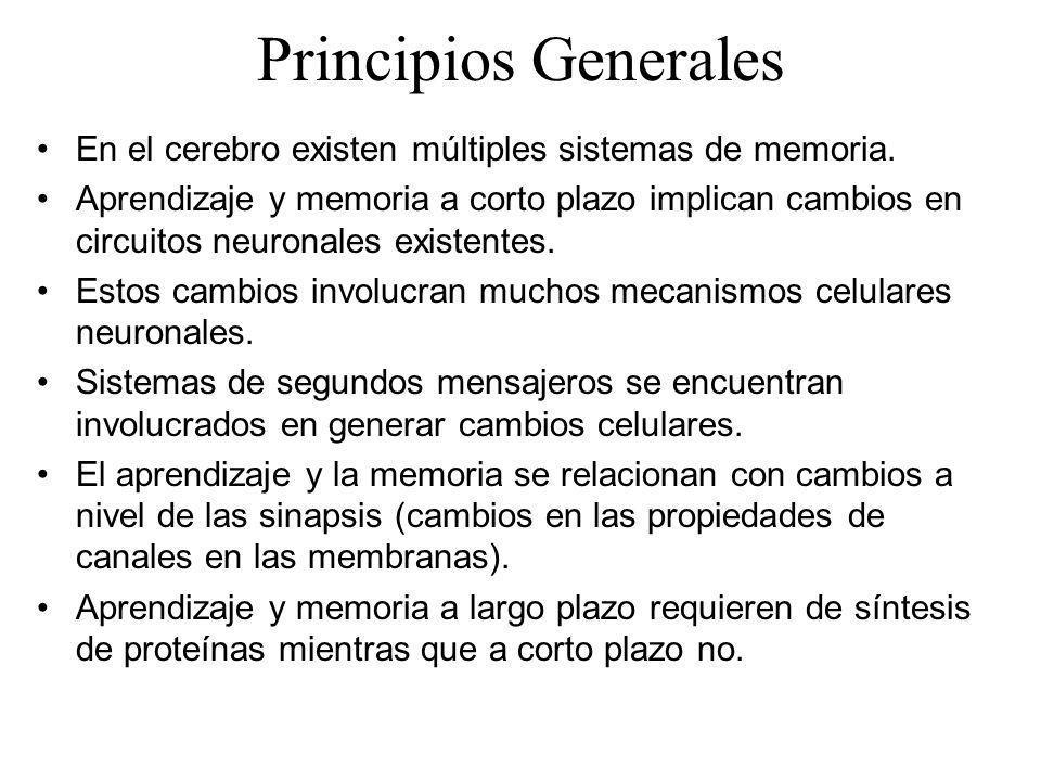 Principios Generales En el cerebro existen múltiples sistemas de memoria.