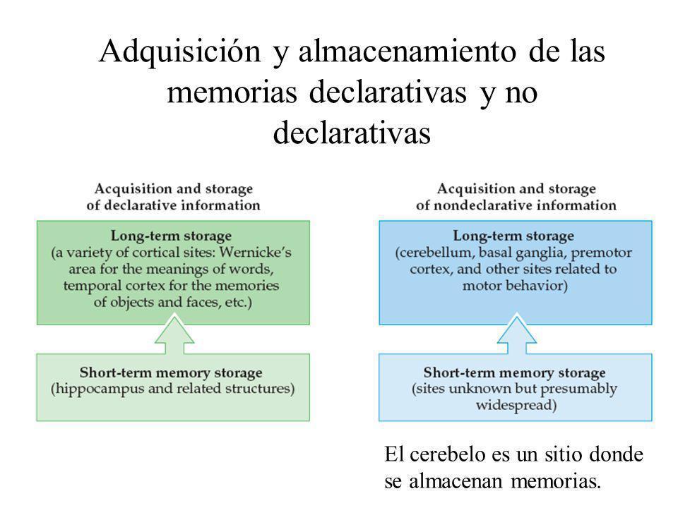 Adquisición y almacenamiento de las memorias declarativas y no declarativas