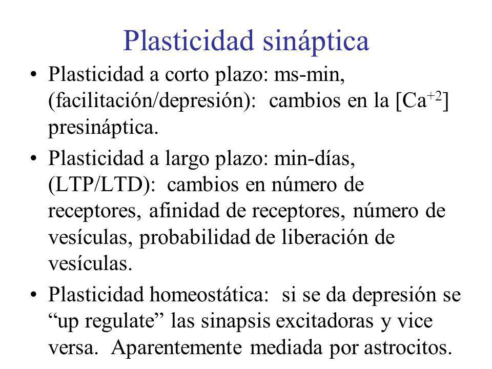 Plasticidad sináptica