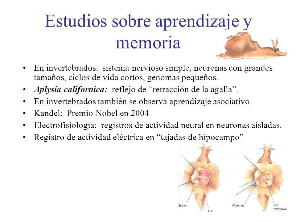Estudios sobre aprendizaje y memoria