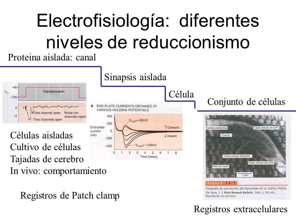 Electrofisiología: diferentes niveles de reduccionismo