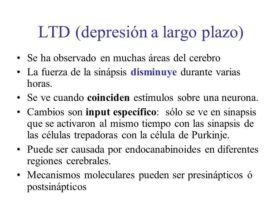 LTD (depresión a largo plazo)