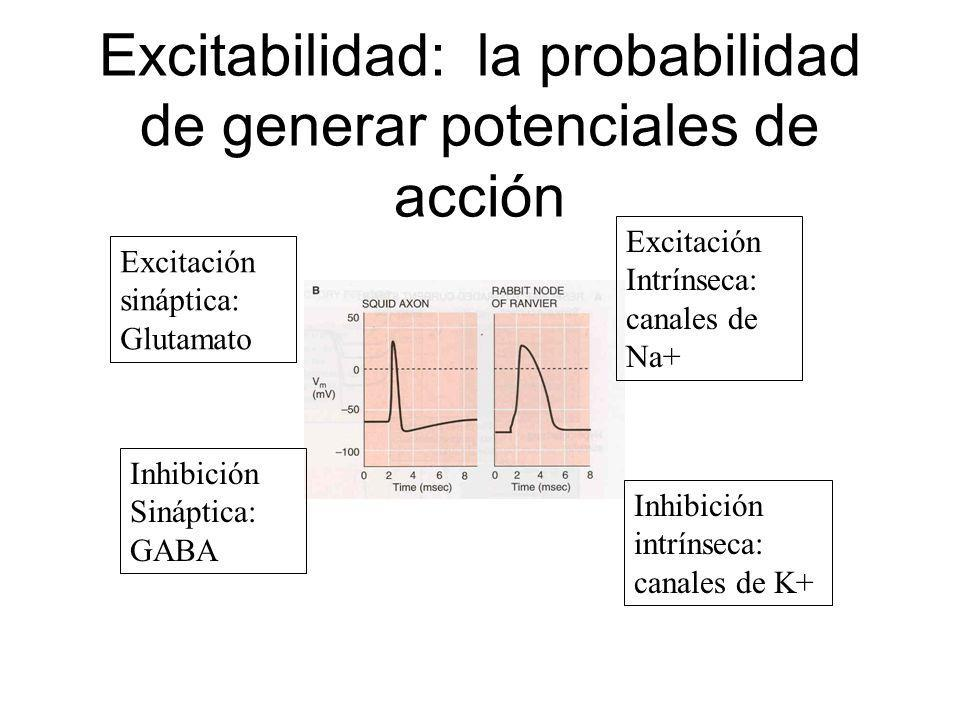 Excitabilidad: la probabilidad de generar potenciales de acción