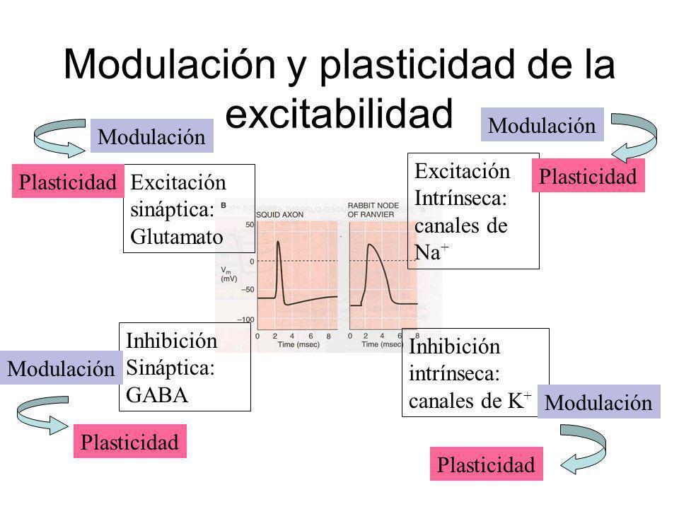Modulación y plasticidad de la excitabilidad