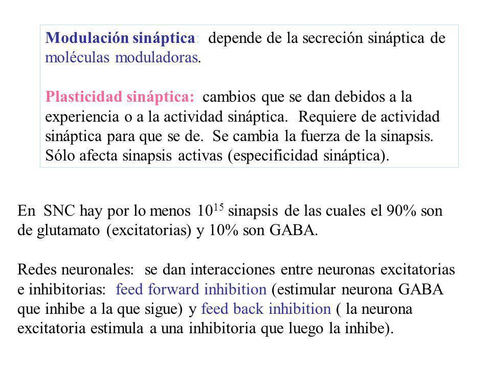 Modulación sináptica: depende de la secreción sináptica de moléculas moduladoras.