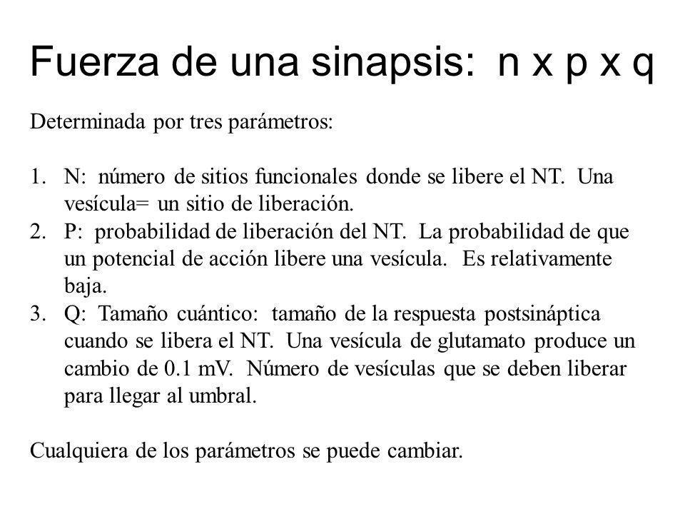 Fuerza de una sinapsis: n x p x q