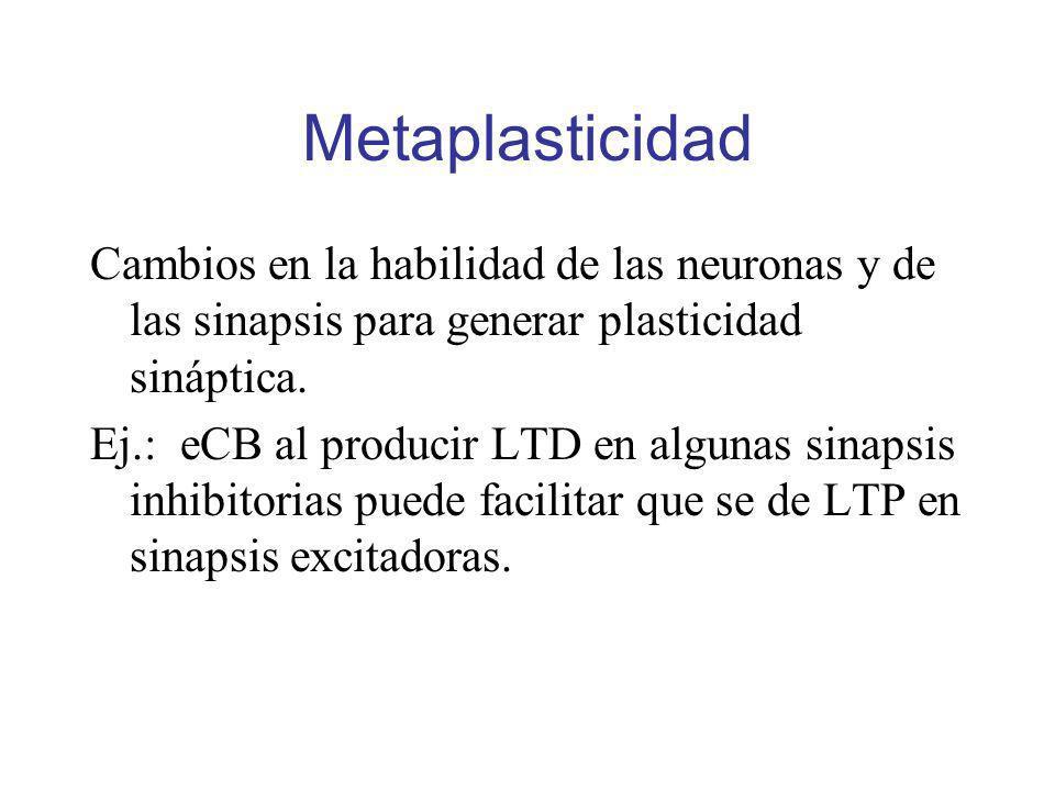 Metaplasticidad Cambios en la habilidad de las neuronas y de las sinapsis para generar plasticidad sináptica.