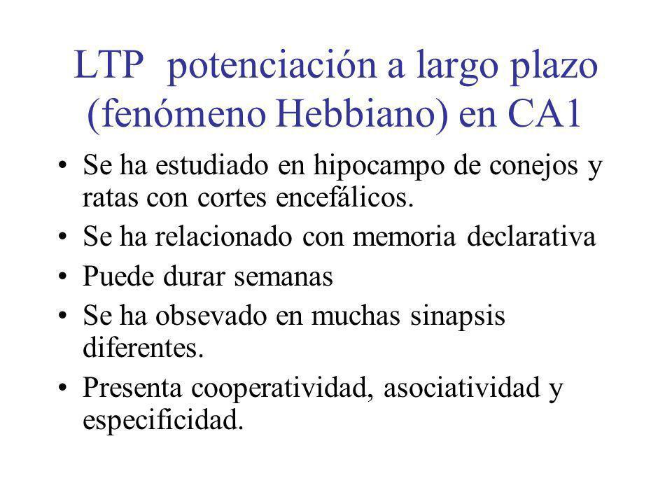 LTP potenciación a largo plazo (fenómeno Hebbiano) en CA1