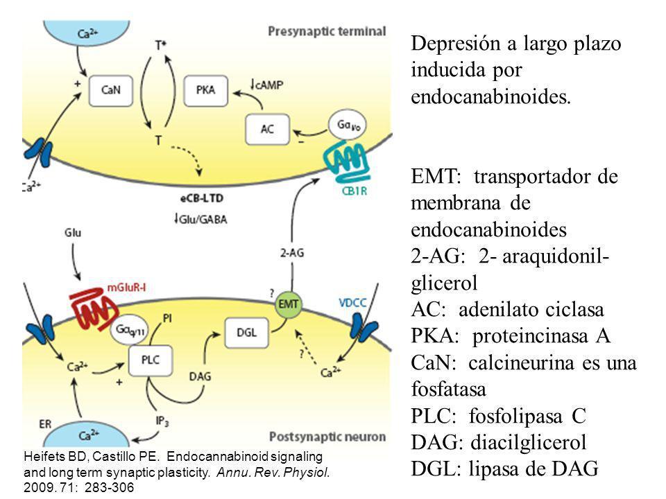 Depresión a largo plazo inducida por endocanabinoides.