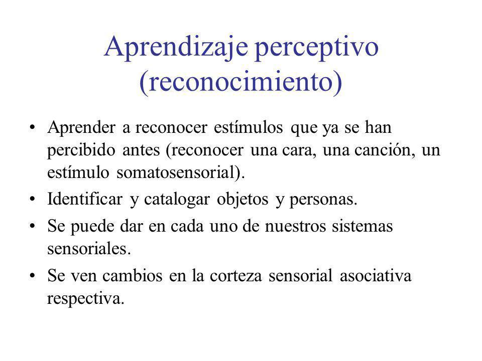 Aprendizaje perceptivo (reconocimiento)