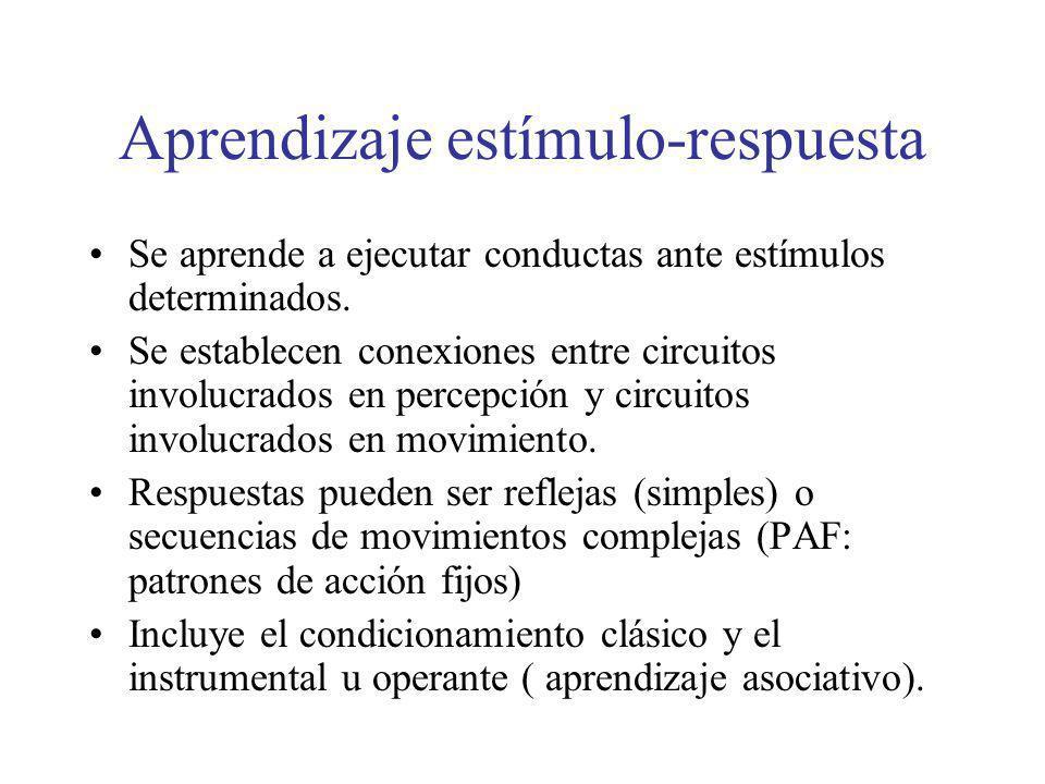 Aprendizaje estímulo-respuesta