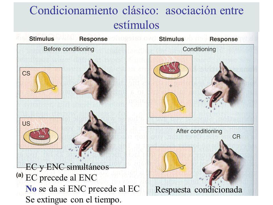 Condicionamiento clásico: asociación entre estímulos