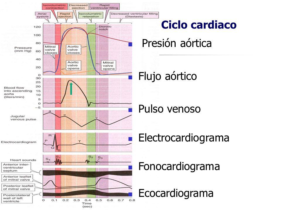 Ciclo cardiaco Presión aórtica Flujo aórtico Pulso venoso