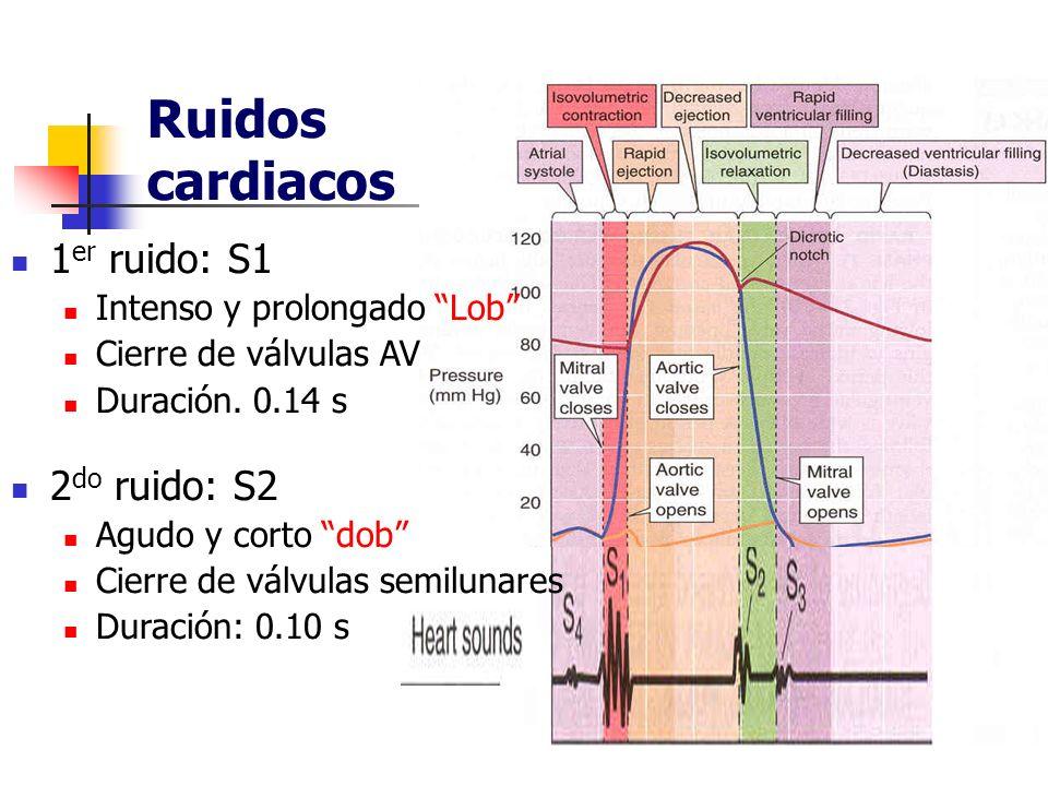 Ruidos cardiacos 1er ruido: S1 2do ruido: S2