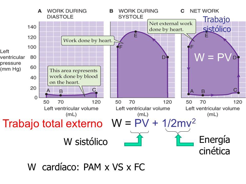 W = PV Trabajo total externo W = PV + 1/2mv2 W=P∆V Energía cinética
