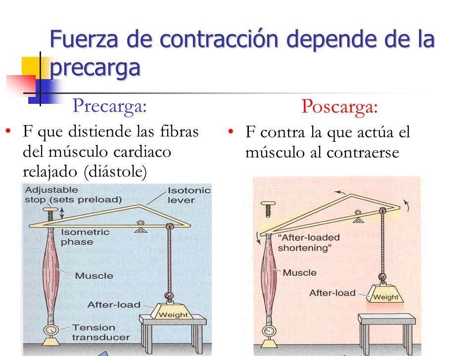 Fuerza de contracción depende de la precarga