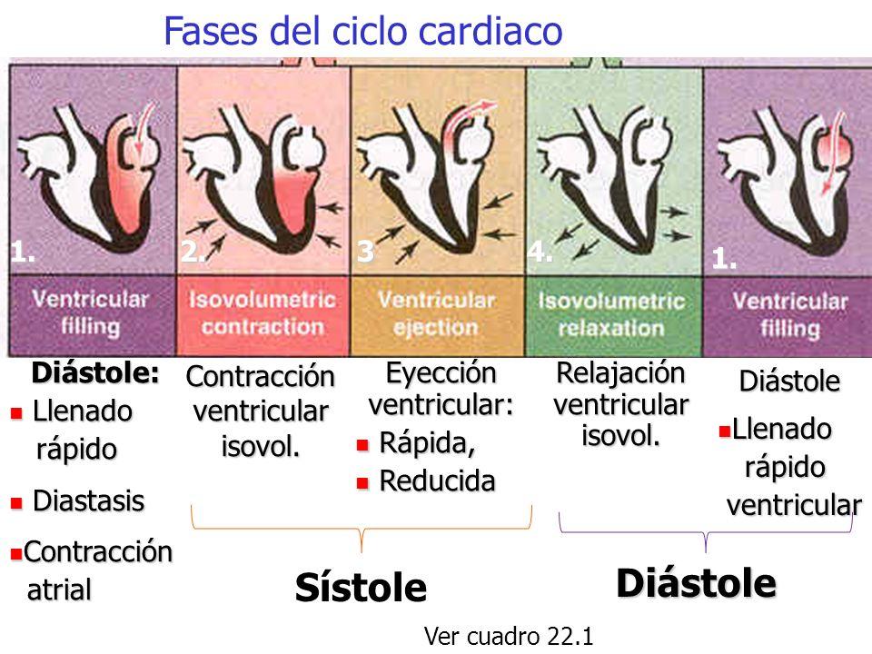 Fases del ciclo cardiaco