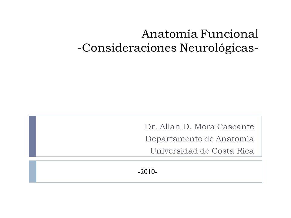 Anatomía Funcional -Consideraciones Neurológicas-