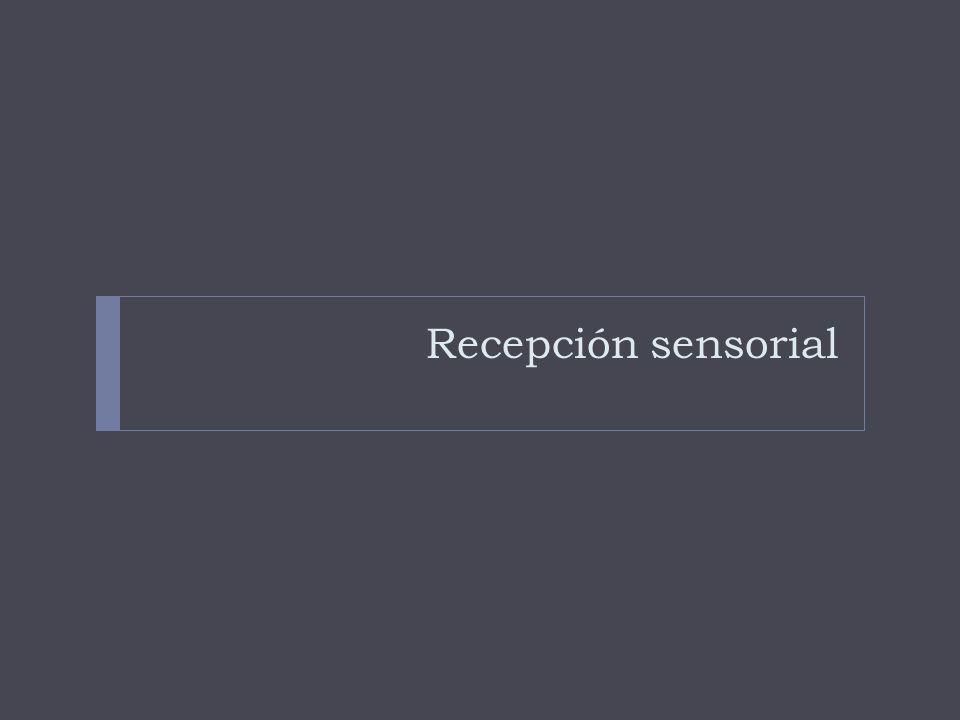 Recepción sensorial