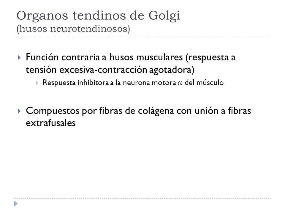 Organos tendinos de Golgi (husos neurotendinosos)