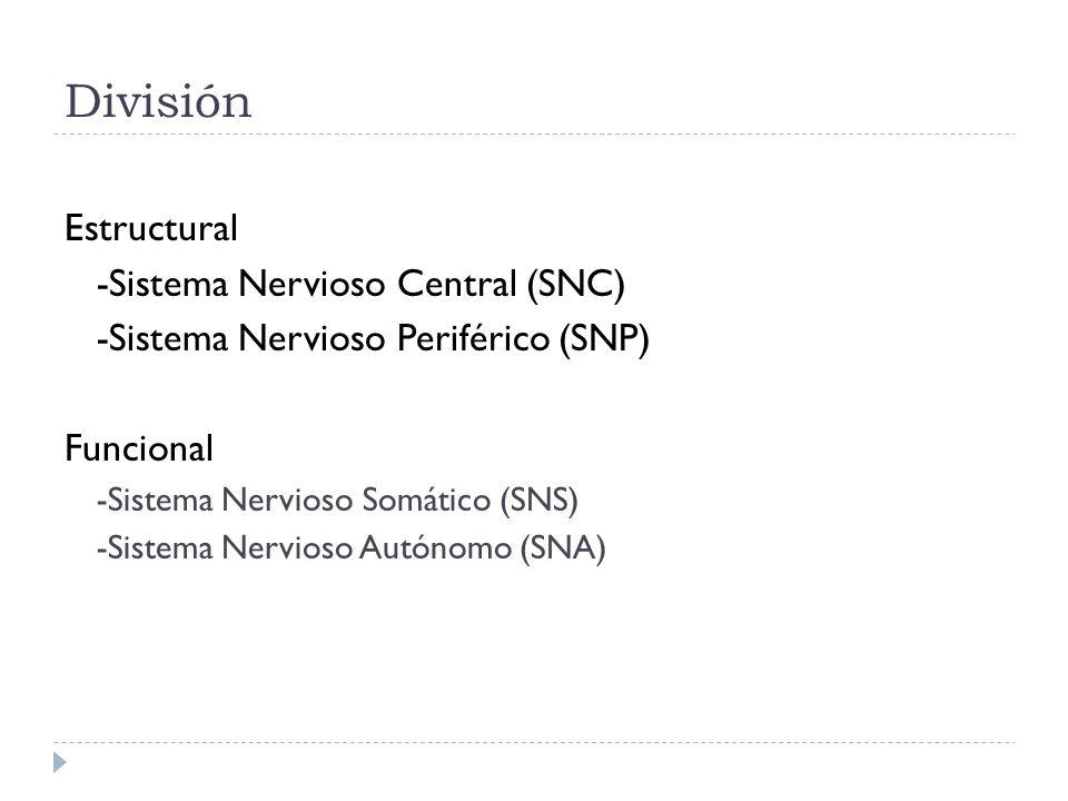 División Estructural -Sistema Nervioso Central (SNC)