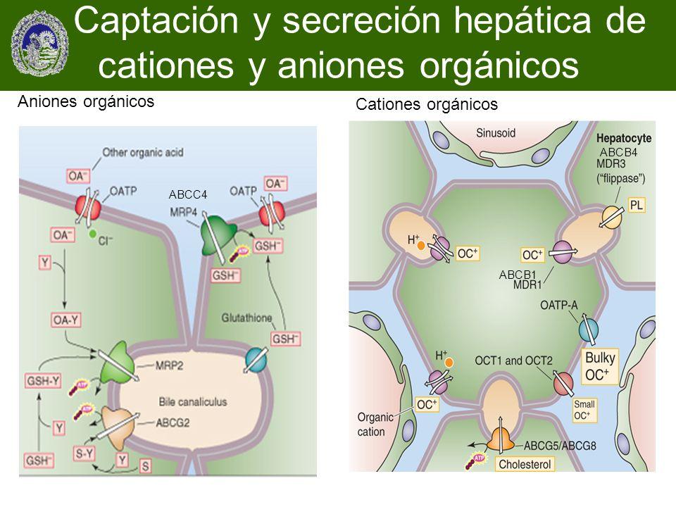 Captación y secreción hepática de cationes y aniones orgánicos