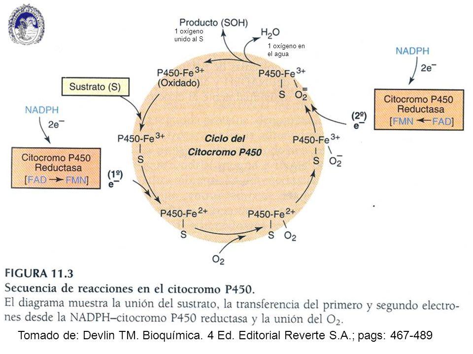 1 oxígeno unido al S 1 oxígeno en el agua. Tomado de: Devlin TM.