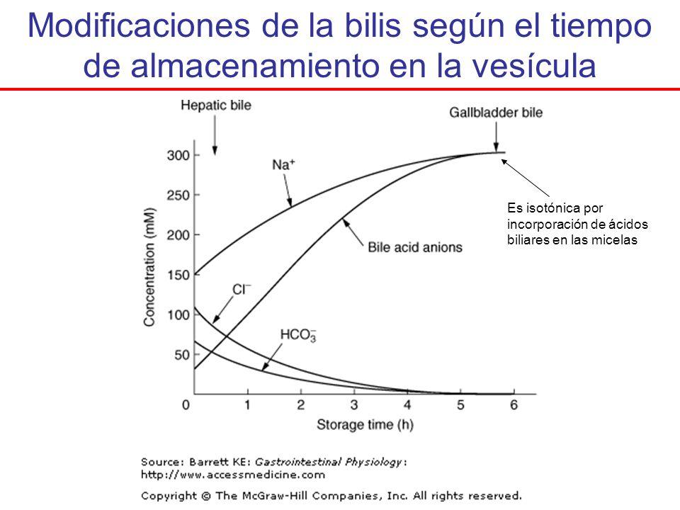 Modificaciones de la bilis según el tiempo de almacenamiento en la vesícula