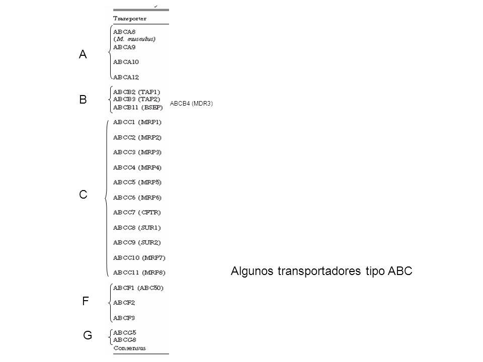 Algunos transportadores tipo ABC