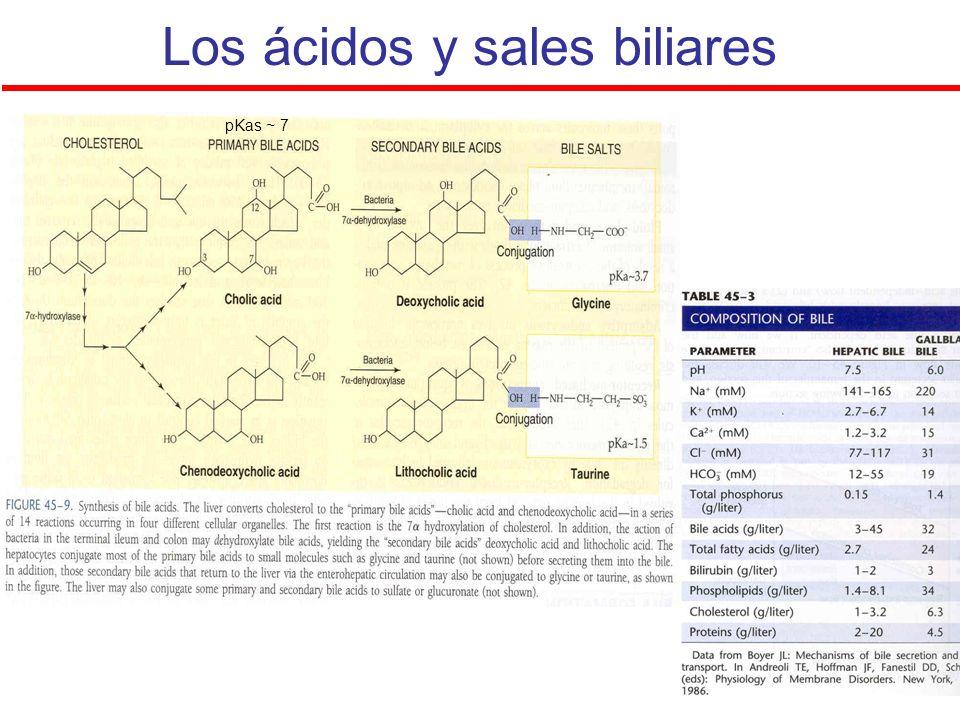 Los ácidos y sales biliares