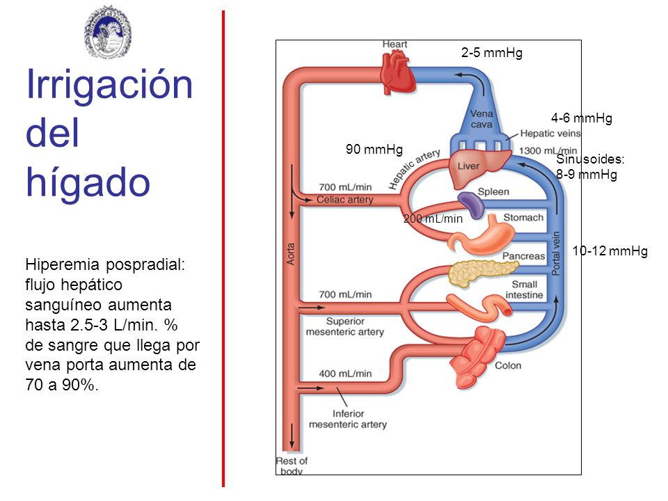 Irrigación del hígado 10-12 mmHg. 4-6 mmHg. Sinusoides: 8-9 mmHg. 2-5 mmHg. 90 mmHg. 200 mL/min.