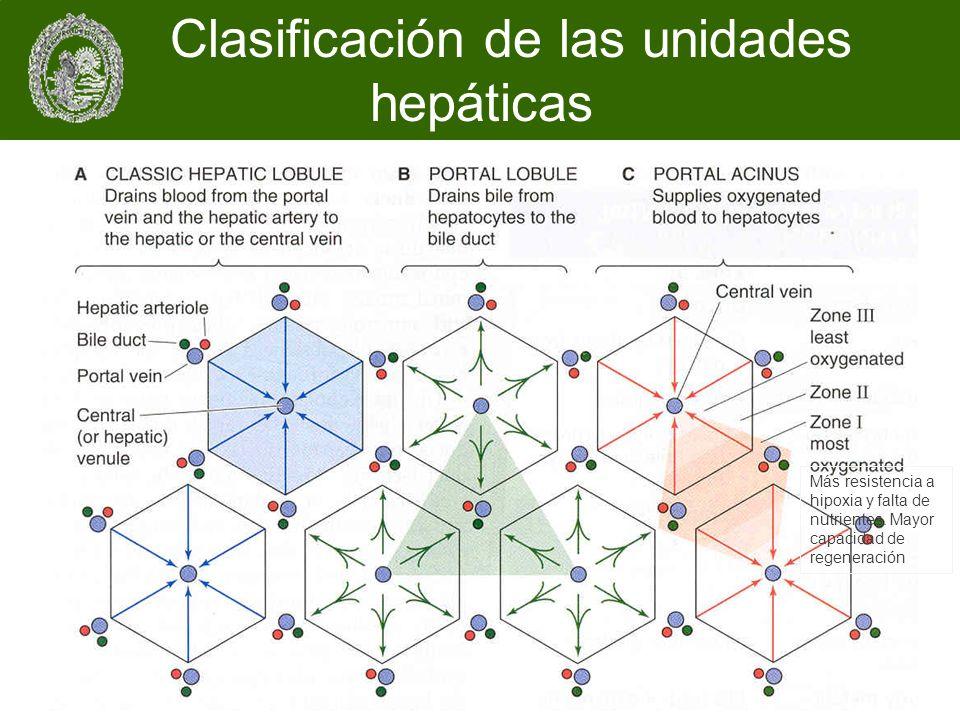 Clasificación de las unidades hepáticas