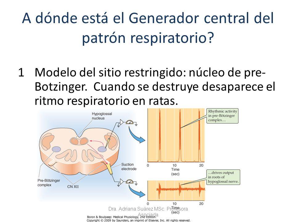A dónde está el Generador central del patrón respiratorio