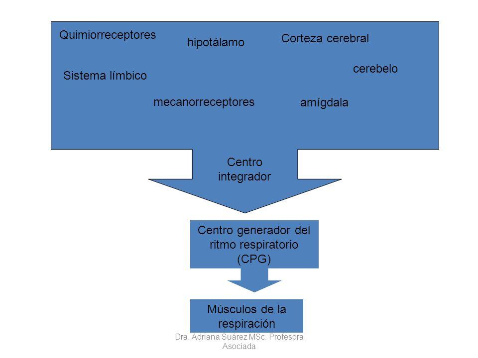 Centro generador del ritmo respiratorio (CPG) cerebelo