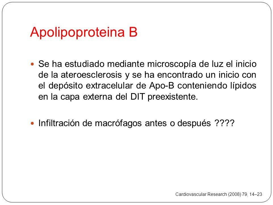 Apolipoproteina B