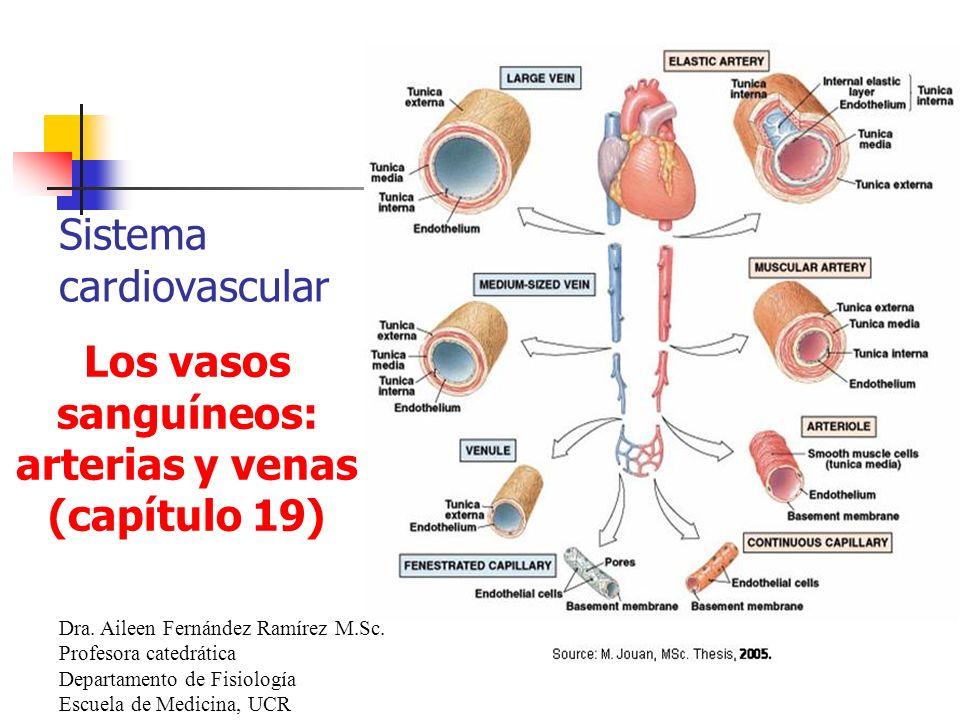 Los vasos sanguíneos: arterias y venas (capítulo 19)