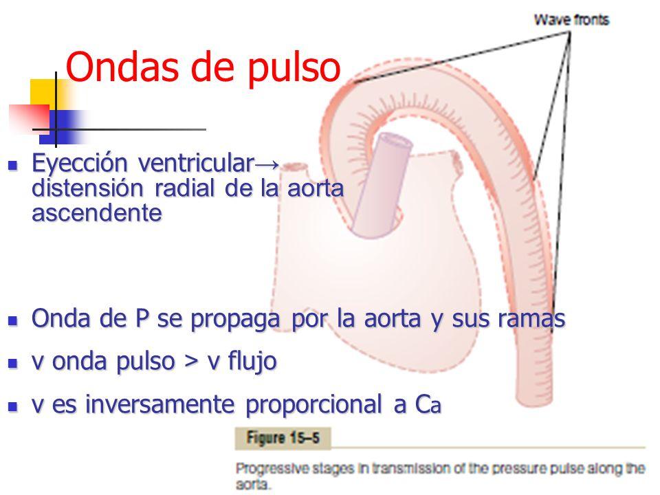 Ondas de pulso Eyección ventricular→ distensión radial de la aorta ascendente. Onda de P se propaga por la aorta y sus ramas.