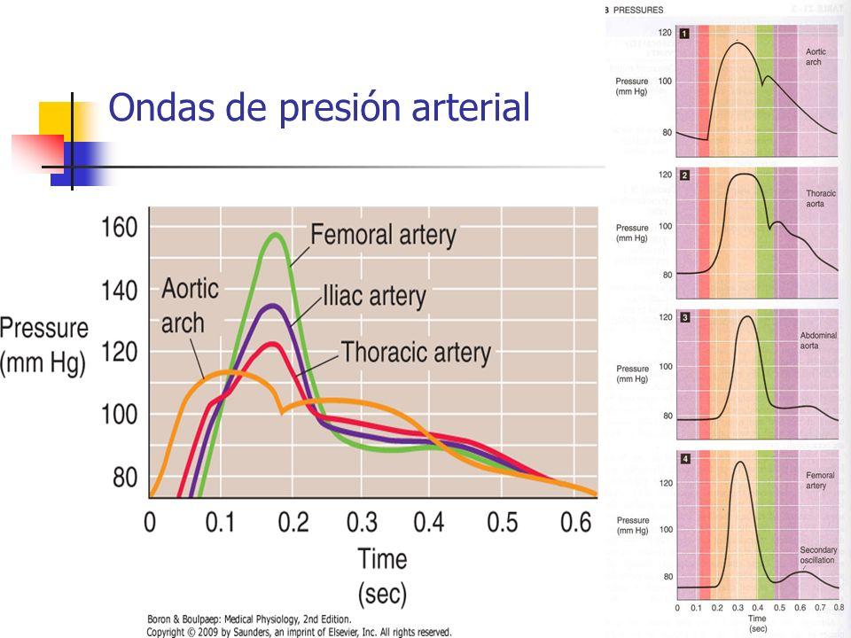 Ondas de presión arterial
