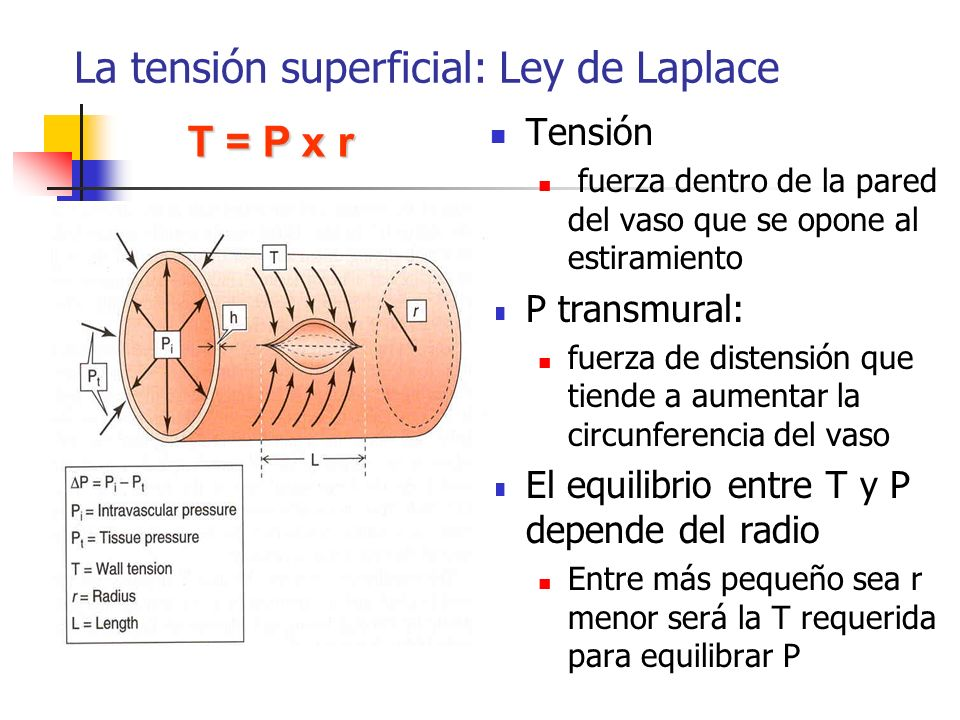 La tensión superficial: Ley de Laplace